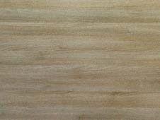 Acacia Oscura